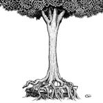 ストレイテナー - NO ~命の跡に咲いた花~